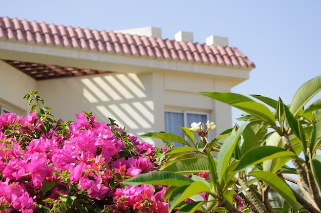Luxe villahotel in tropische tuin in egypte. zomer vakantie achtergrond