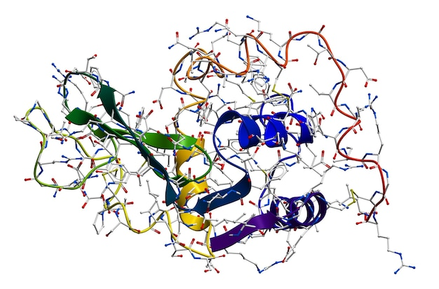 Lysozyme, het natuurlijke antibacteriële enzym in speeksel, melk, slijm, tranen, eiwit enzovoort