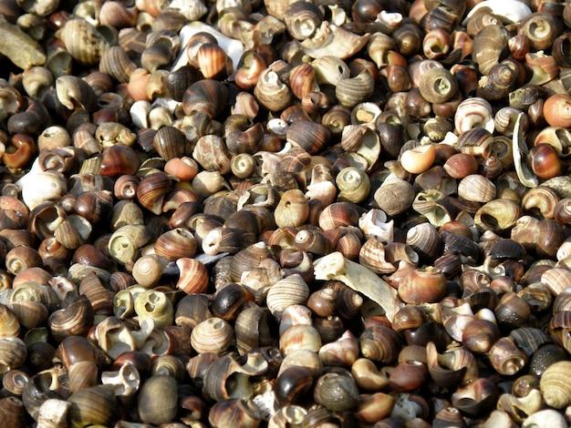 Maagdenpalmschelpen gebarsten en verpletterd op een strand
