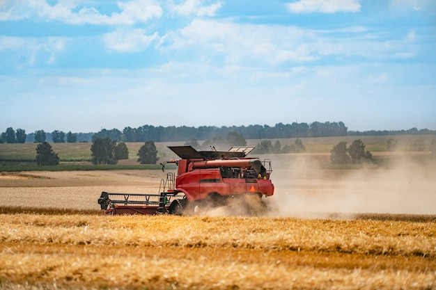 Maaidorser in actie op het veld. maaidorser. oogstmachine voor het oogsten van een tarweveld.