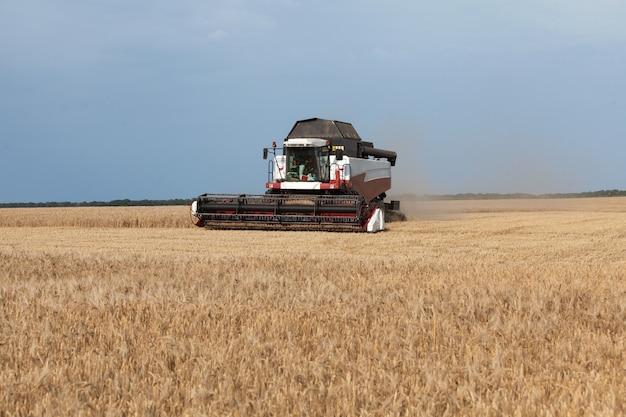 Maaidorser in een tarwe- of roggeveld, strada, oogsten. het verzamelen van gewassen door landbouwmachines op het veld in het zomerseizoen.