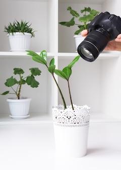Maak foto's van kamerplanten met je camera