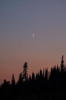 Maan met zonsondergang in het bos