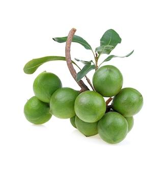 Macadamia noten geïsoleerd op wit