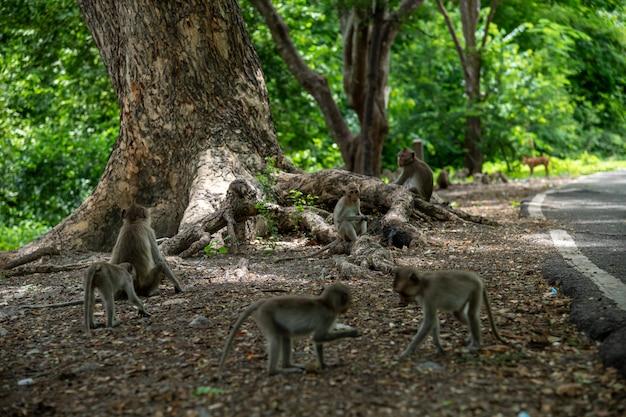 Macaques met lange staart (macaca-fascicularis) in stedelijk bos, ratchaburi, thailand