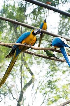 Macaw caninde die vrij eet en vliegt in een park. arara caninde komt oorspronkelijk uit brazilië.