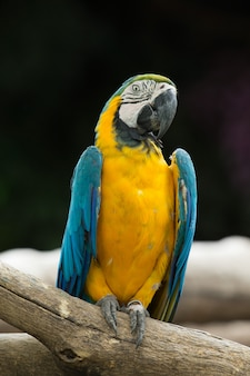 Macaws papegaaien