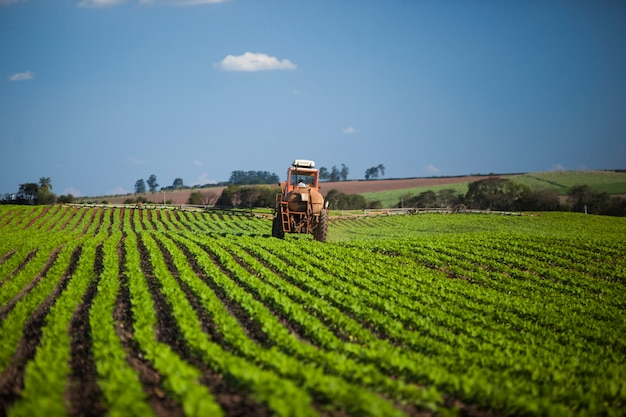Machine die bij pindaveld onder een blauwe hemel werkt. landbouw.