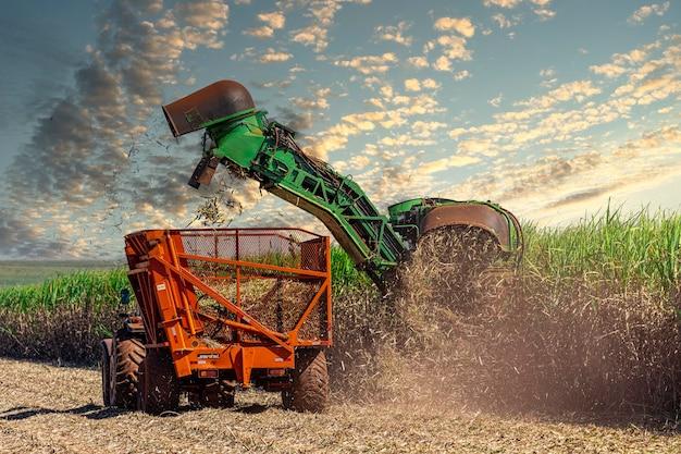 Machine oogsten suikerriet plantage.