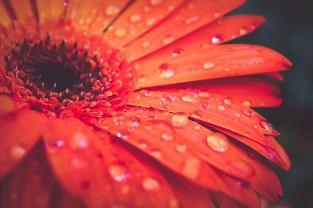 Macro abstracte achtergrondtextuurdruppeltjes op bloembloemblaadjes