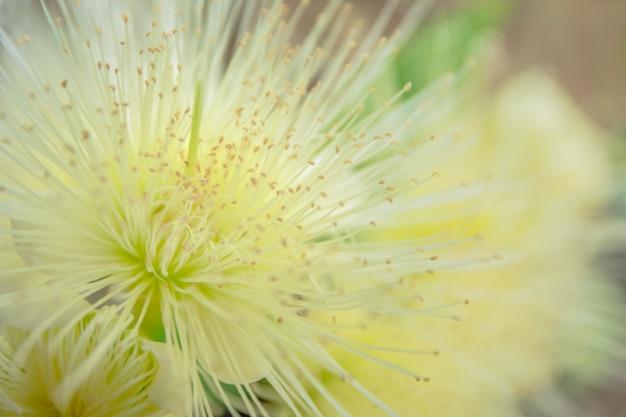 Macro bloem roos appel