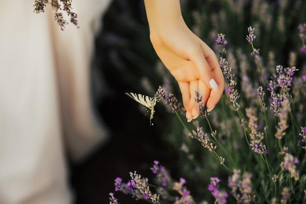 Macro close up van een prachtige zwart-witte vlinder in lavendel