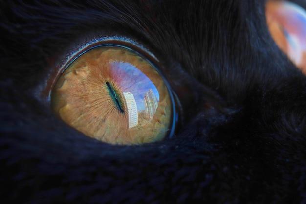 Macro foto van een cat's eye zwarte kat kijkt naar de hemel reflectie in het oog achtergrond onscherp