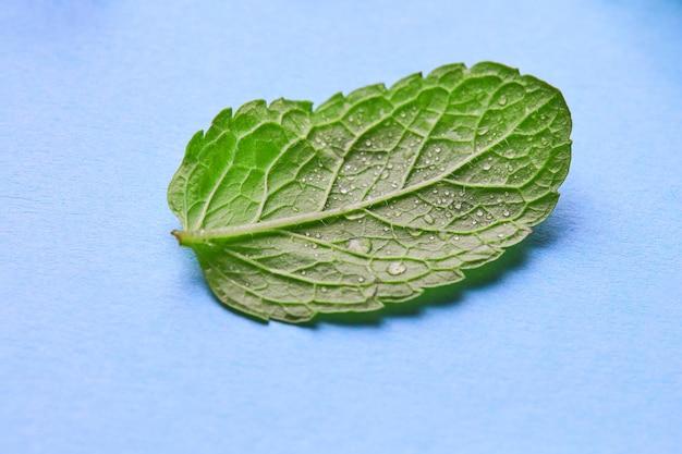 Macro foto vers groen blad van munt met druppels dauw