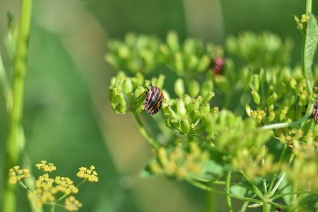 Macro gestreepte bug op een groene plant