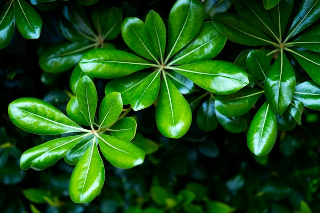 Macro groene bladeren