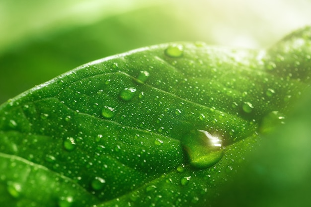 Macro grote dauw of regendruppels op groen blad, close-up.