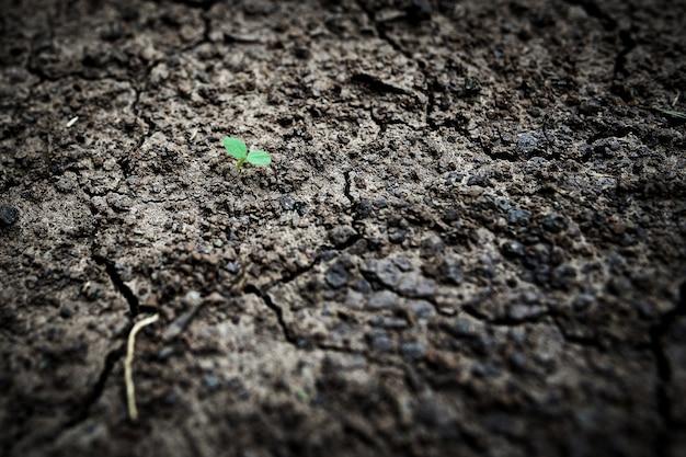 Macro kleine boom op de gebarsten grond