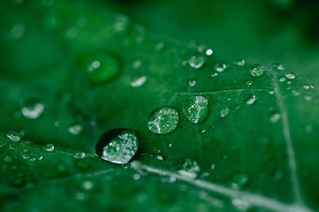 Macro-opname van boerenkool salade met waterdruppels. biologisch detoxdieet. superfood. natuurlijke achtergrond