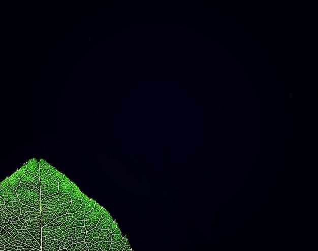 Macro-opname van een bloemblaadje met spatten en druppels water. textuur van blad en bloemblaadje op een achtergrond van wazige spatten.