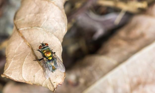 Macro-opname van een vlieg die op een droog herfstblad staat met een wazig oppervlak