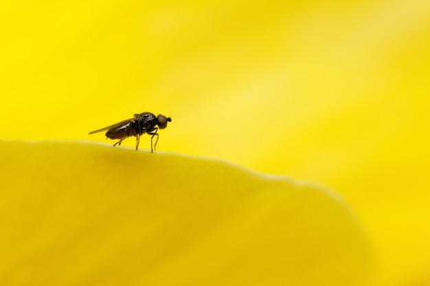 Macro-opname van een vlieg die op een geel oppervlak zit
