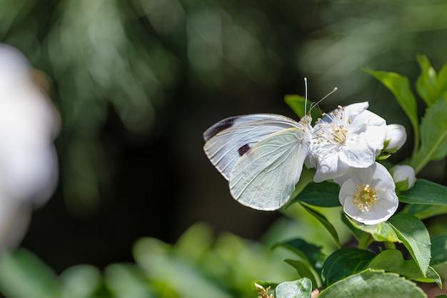 Macro-opname van een vlinder op een bloem