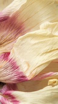Macro-opname van gedroogde anemoonbloem