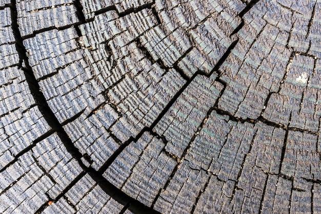 Macro-opname van het gekapte hout met patronen en lijnen