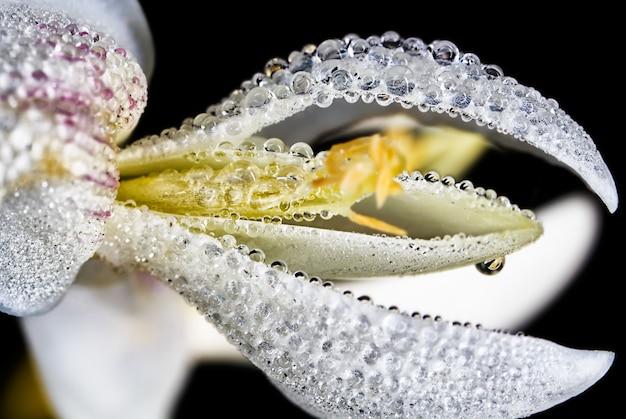 Macro-opname van waterparels op een sneeuwklokje