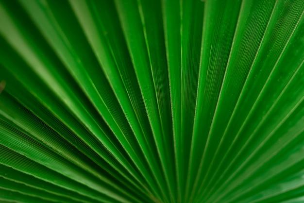 Macro van groen palmblad met exemplaarruimte. zomer, vakantie en reizen concept
