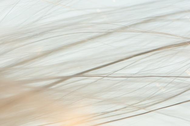 Macroachtergrond, het haar van de grasbloem