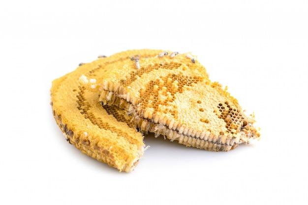 Macrobijen op de spruit van de honingraatstudio en geïsoleerd op wit