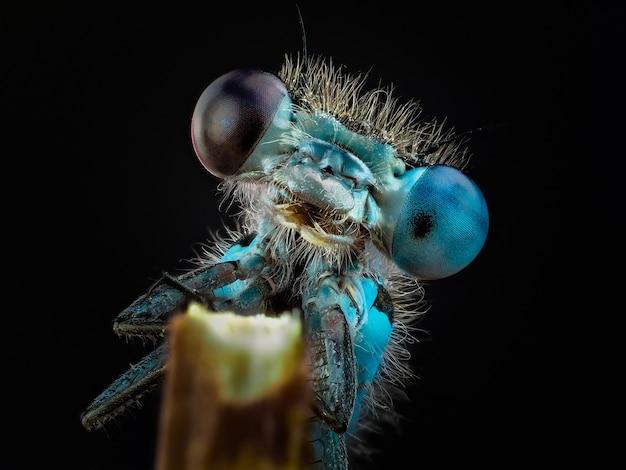 Macrofoto van een insect