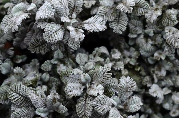 Macrofoto van kleine groene aanplantingen met bladeren