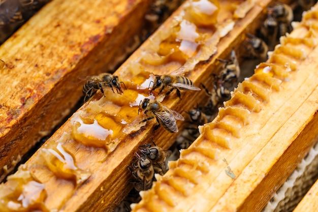 Macrofoto van werkende bijen op honingraten. afbeelding van bijenteelt en honingproductie.