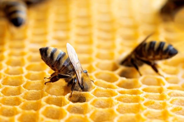Macrofoto van werkende bijen op honingraten.