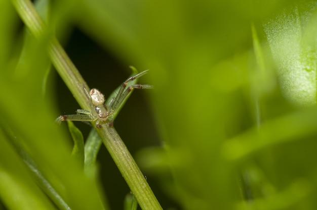 Macrofotografie die van een kleine insectzitting is ontsproten op een groene tak