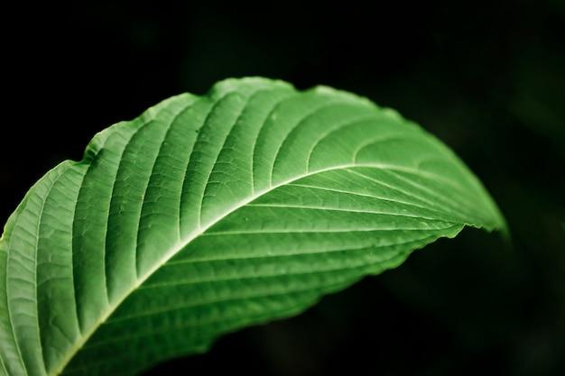 Macrofotografie van blad met donkere achtergrond