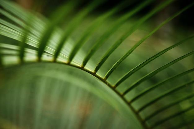 Macrofotografie van tropisch blad