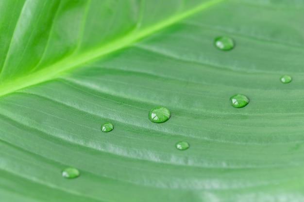 Macrofotograthie van natuurlijk groen blad met regendruppels