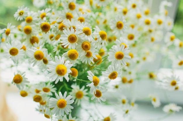 Madeliefjebloemen op heldere dag