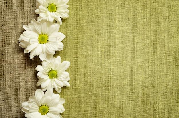 Madeliefjes op groene doek achtergrond