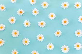 Madeliefjes patroon op blauwe achtergrond
