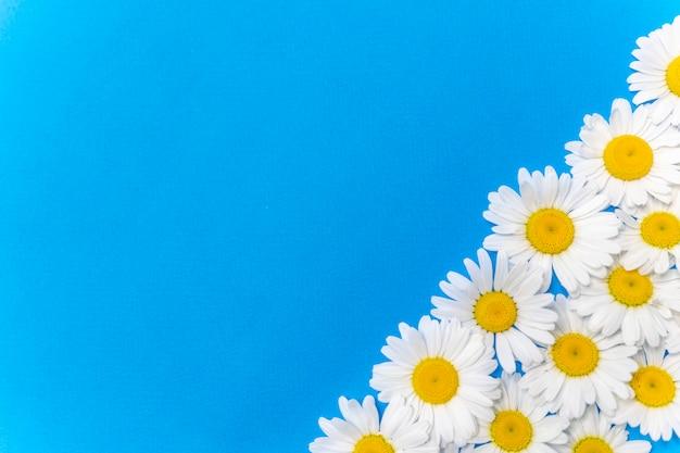 Madeliefjes plat lag lente- en zomerbloemen op een blauwe achtergrond.
