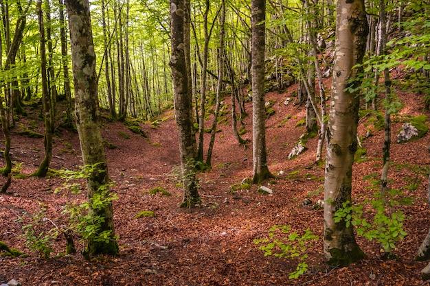Magisch en weelderig bos in opkomst. mount aizkorri 1523 meter, de hoogste in guipuzcoa. baskenland. klim door san adrian en keer terug door de oltza-velden