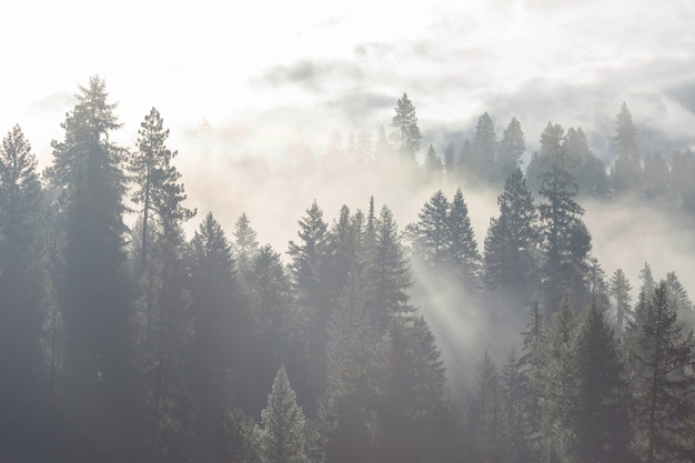 Magisch mistig bos. prachtige natuurlijke landschappen.
