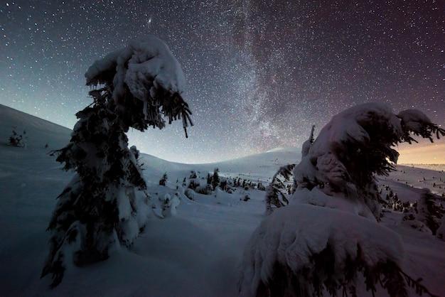 Magisch uitzicht op besneeuwde dennenbomen die op een heuvel in de bergen groeien op een wintersterrennacht