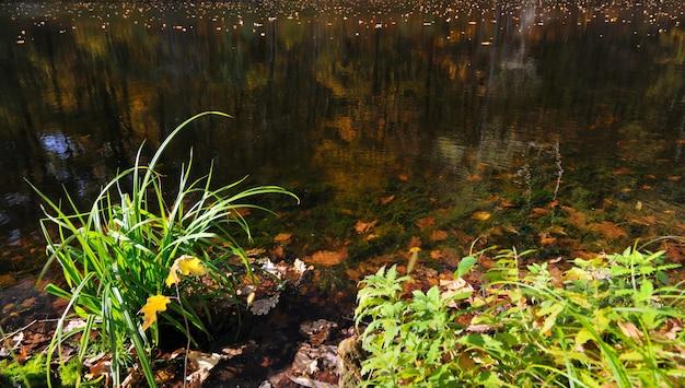 Magische landschaps gele bladeren die in meer drijven