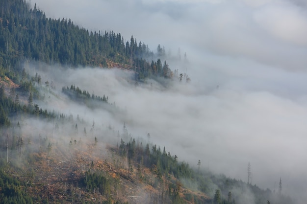 Magische mist in het bos
